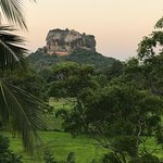 "view of Sigiriya Rock from the breakfast ""tree-house"""