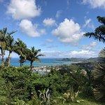 Pink plantation view
