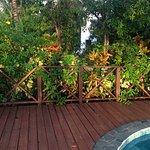 Tropical pool in green garden
