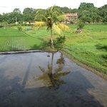 逆さ椰子の木
