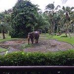 Photo de Elephant Safari Park & Lodge