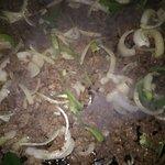 Deliciosas tortillas de arina saliendo del comal y deliciosa fajita 😋😋😋
