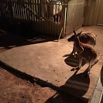 Josephine's Gallery & Kangaroo Orphanage Foto