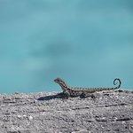 Little lizard sunning itself :)