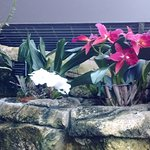 Foto de Olbrich Botanical Gardens