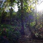 Photo de Mom Chailai Forest Retreat