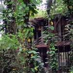 Photo of Mom Chailai Forest Retreat