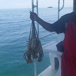 Catch of the day for Snorkel with a Chef