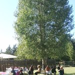 Lawn area has shady aspens and is easily accessible for caterers for events.
