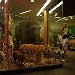 Animal Display 1 - Looks Real!