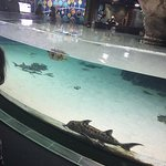 Kelly Tarlton's Sea Life Aquarium Foto