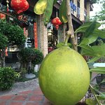 Huge local fruit (optical ilusion)