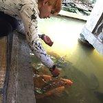 Masakan ikan air tawar,anekan sayuran,tahu nya enak,suasana yang nyaman sejuk