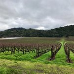 Beautiful, well manicured, historic, and picturesque vineyard tucked away a couple of minutes of