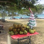 Christmas Tree on the Beach 3 min from the Guesthouse