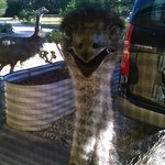 emus greet you on arrival
