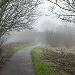 Foggy day on the Kennet tow path behind Elgar Road Reading with Rose Kiln Lane Bridge in distanc