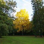 Vue sur le parc et les arbres