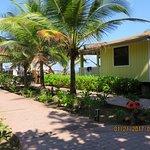 Seagrape Plantation Resort Photo