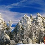 Blue Skies and snowy trees at the top of Herz Mountain