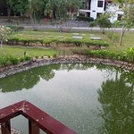 View from balcony with sewerage plant beyond the pond