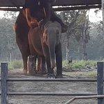 Elephant breeding center.