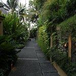 코마네카 앳 탕가유다 사진