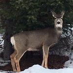 Beautiful deer everywhere!