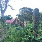 Tree Crop Farm Foto