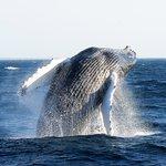Dolphin Fleet Whale Watch, July 4th 2016
