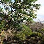 裏庭、真ん中にミカンの木がありました。
