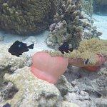 El Jardín de Coral