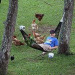 My son loved feeding the chickens and relaxing.