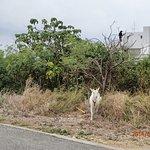 道中にヤギがいます^^