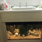 Tropical Themed room with fish tank underneath the basin