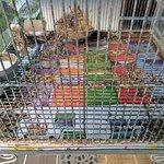 ditry bird cage in lobby