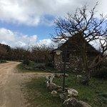 Photo de Antichi Ovili
