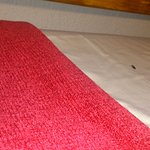 poop droppings on bed in cottage 10 kwambali