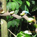 Arenal Oasis Eco Lodge & Wildlife Refuge Foto