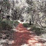 Karura Forest Nairobi Nature Trail