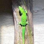 Foto de Reptile Park