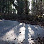 Rückseite, kleiner Tümpel zwischen Bäumen: Datum: 22.01.2017