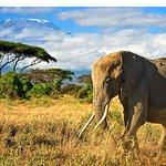 Kilimanjaro from Amboseli