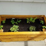 A little herb garden outside the communal kitchen