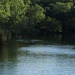 Book a trip to Mzima springs. There are hippos back there!