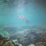 Sealife in the lagoon