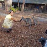 Feeding a local Kangaroo and her Joey