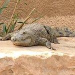 Foto de Riyadh Zoo