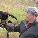 Harris Hawk Falconry with Michael from Edinburgh