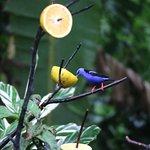 Foto de Catarata Eco Lodge S.A